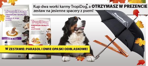 tropidog_baner_top_parasolka