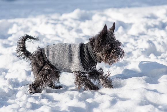 ami play sweterek dla psa