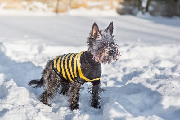 sweter dla psa amiplay