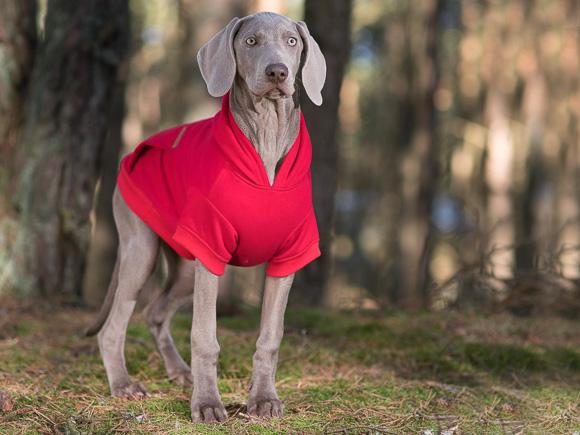 amiplay bluza texas dla psa