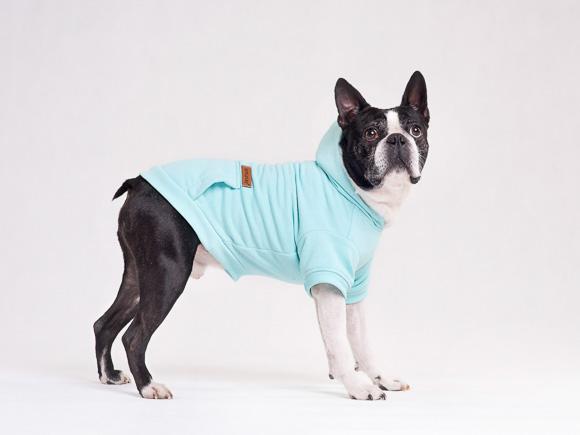 amiplay texas niebieskie ubranko dla psa