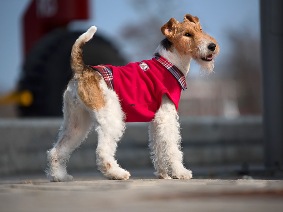 amiplay winston bluza dla psa