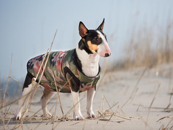 ami play bronx kurtka dla psa