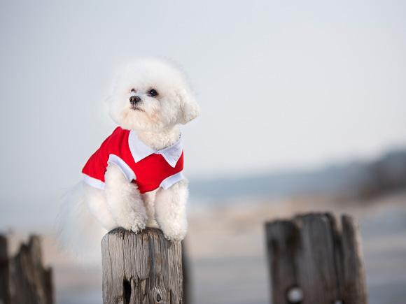 amiplay oxford ubranko dla psa