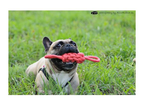 5904760174429 zabawka dingo dla psa
