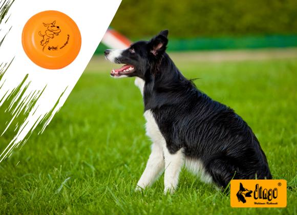 dingo frisbee dla psa