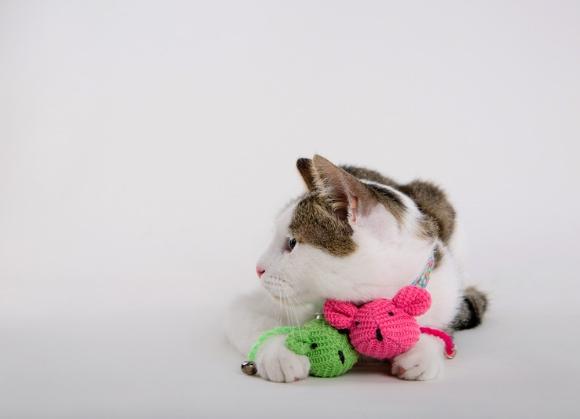 dingo zabawka myszka dla kota 5904760212497