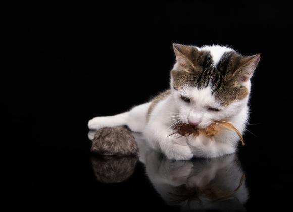 5904760212824 zabawka dingo dla kota