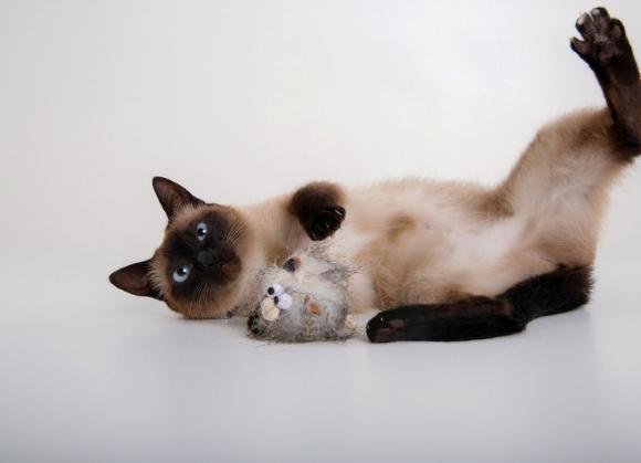 5904760212855 zabawka dla kotów