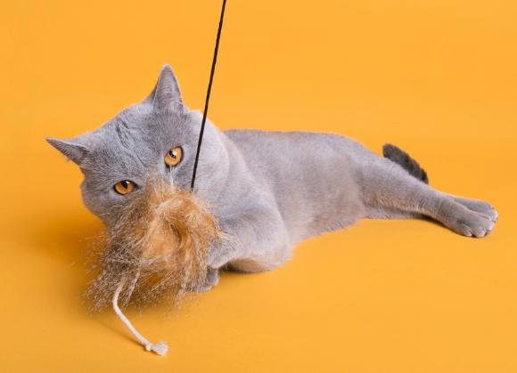 5904760212886 zabadka dla kotów -  dingo