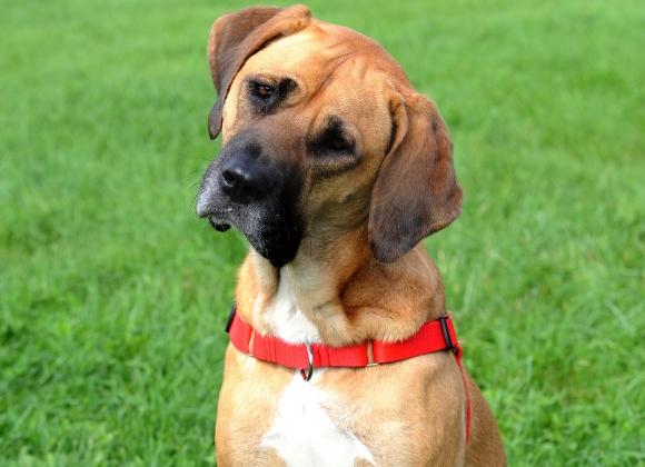 Dingo szelki easy walk dla psa
