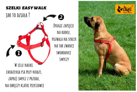 dingo szelki easy walk jak nauczyć psa chodzenia na smyczy