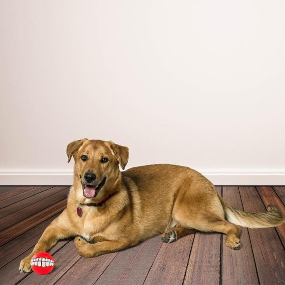 Dingo zabawka dla psa pileczka