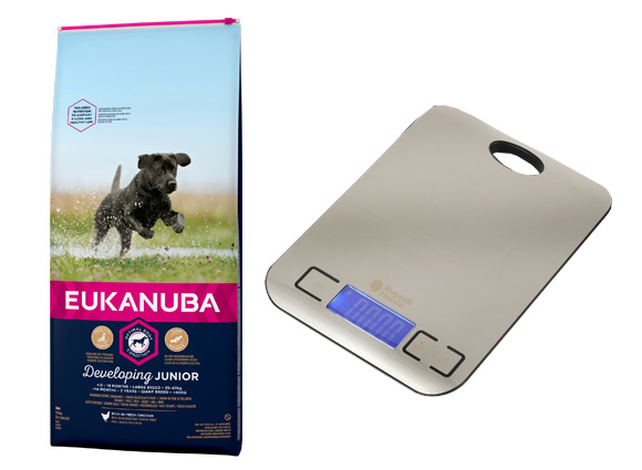 karma eukanuba junior large breed + waga gratis