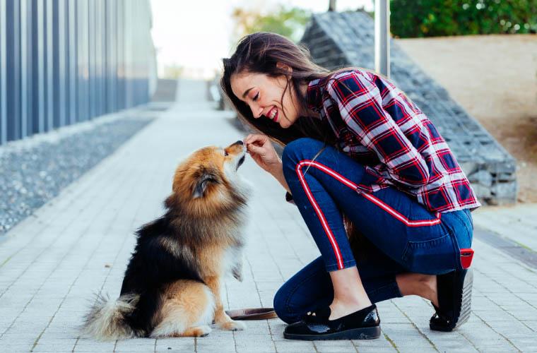 Przysmaki Bosch dla psów