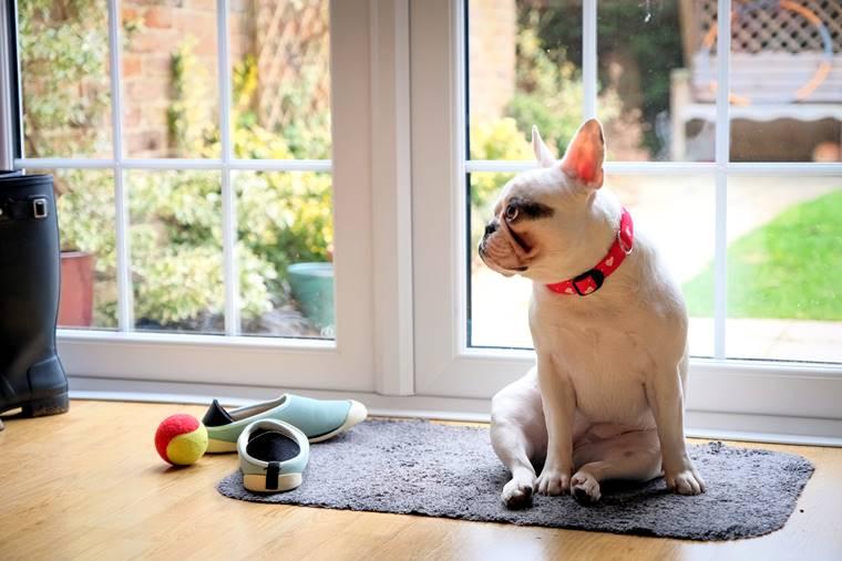 Co zrobić z psem w czasie kwarantanny?