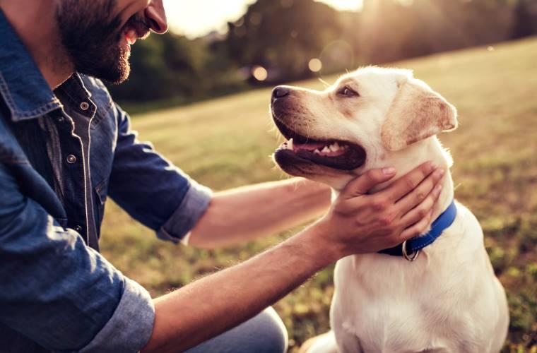 Czy można zarazić się koronawirusem od psa lub kota?