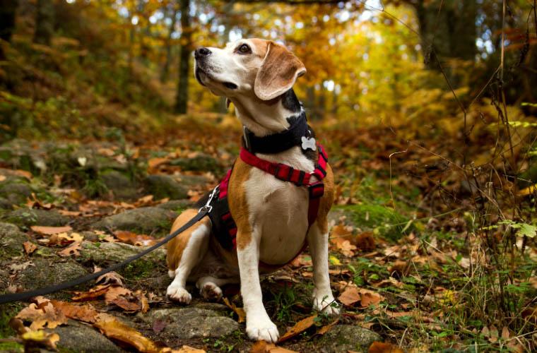 Jak zadbać o bezpieczeństwo psa na spacerze w lesie?