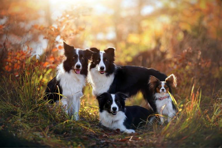 Karmy dla psa Dolina Noteci Premium