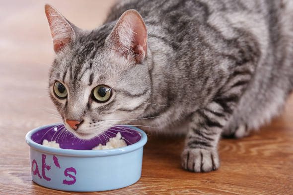 Karmy Felix dla kota