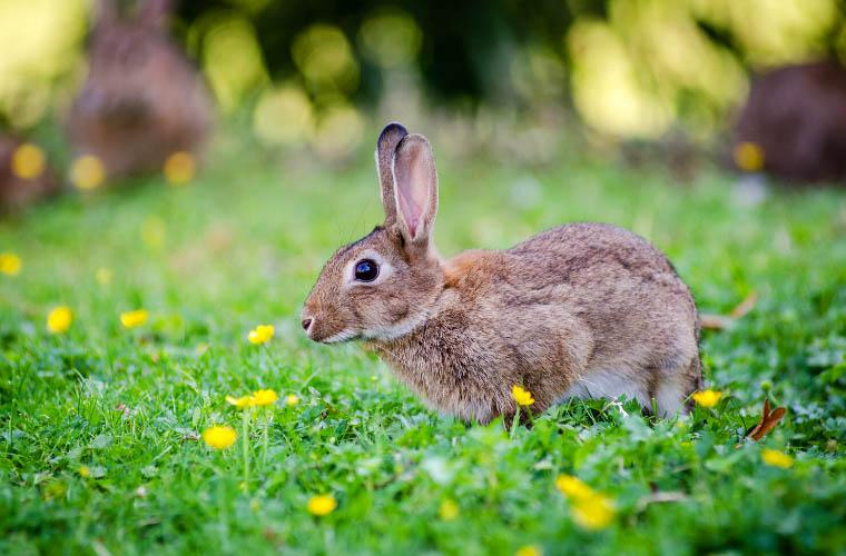 Zioła dla królika