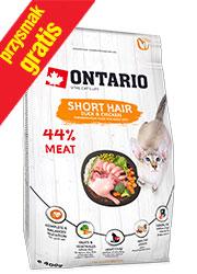 ONTARIO CAT SHORT HAIR KARMA DLA KOTA