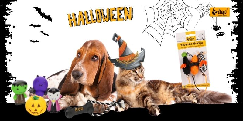 Dingo halloween - strona główna