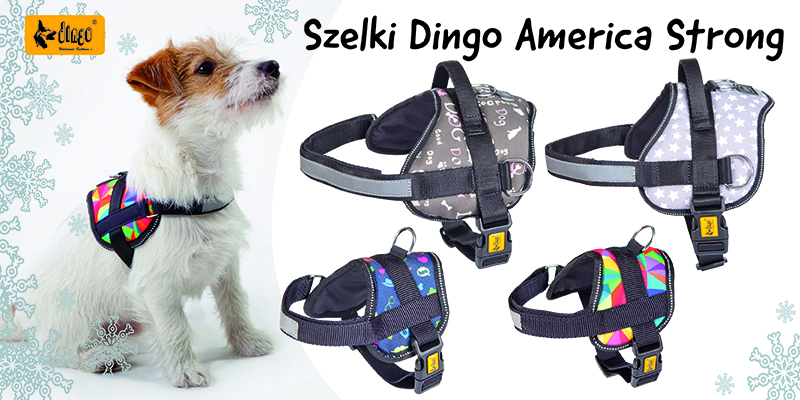 dingo zima szelki america baner  glowny