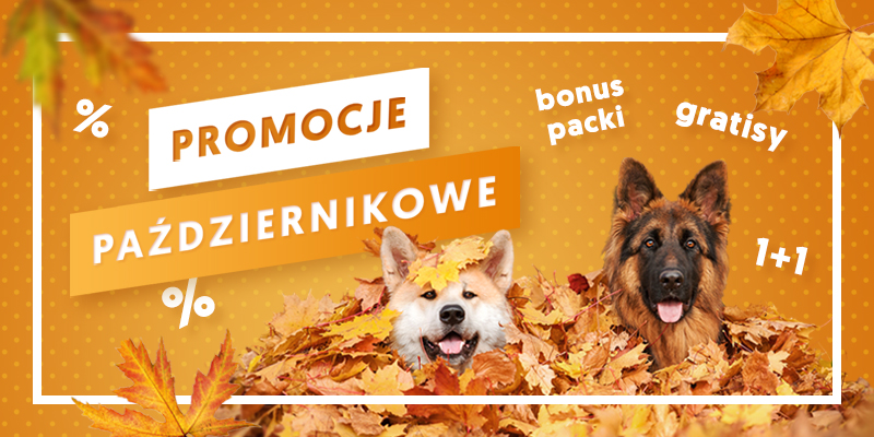 Październikowe promocje - baner główny