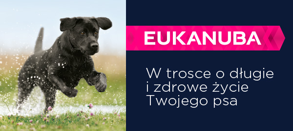 Eukanuba karma dla psa