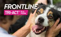 Frontline - tri act - baner boczny
