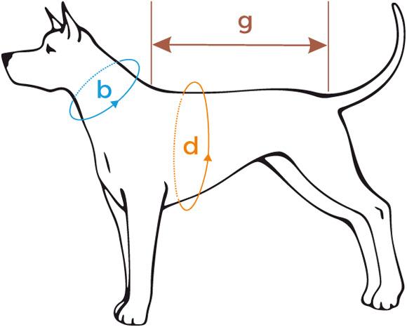 wymiarowanie ubranek dla psa - ami play