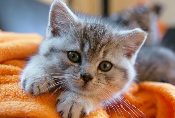 Telekarmapl Karma Telekarmapl Aktualności Czy Kot