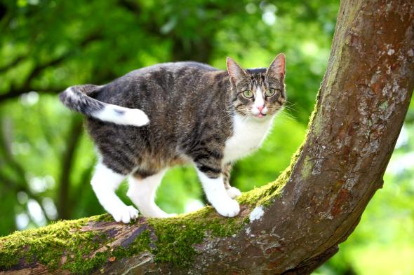 Telekarmapl Karma Telekarmapl Aktualności Dlaczego Koty Boją