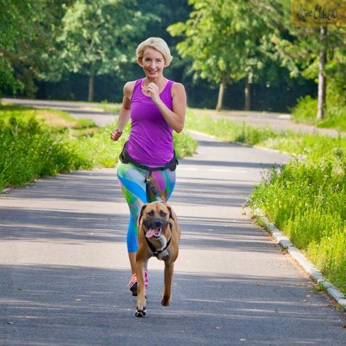 Dingo pas  do biegania z psem