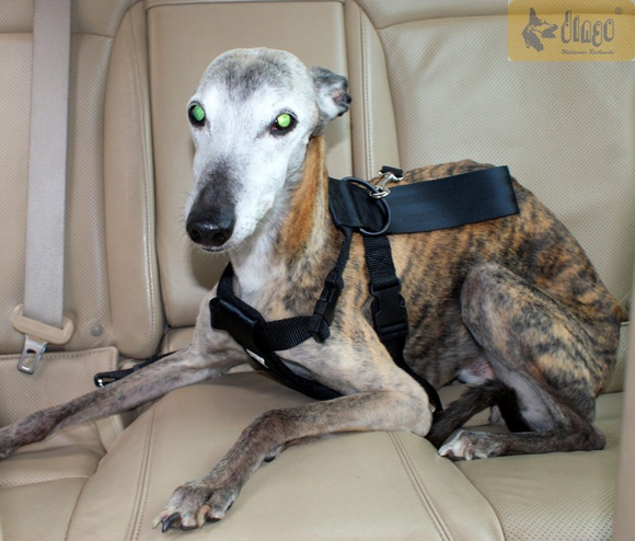Dingo szelki bezpieczeństwa dla psa
